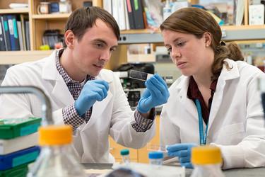 McLean researchers
