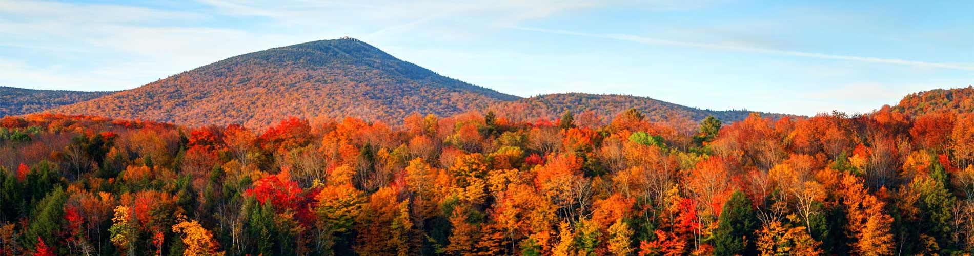 Vista of mountain and fall leaves