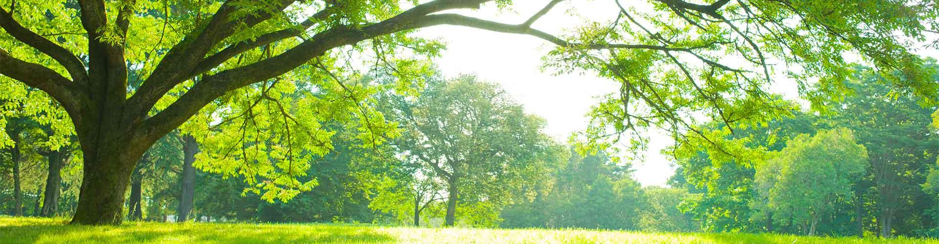 Green leafy woods