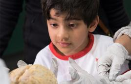 Young boy looking at a human brain