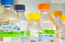 Labeled bottles in a research lab